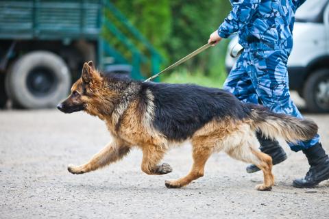Подозреваемый в сбыте десятков тысяч доз наркотиков арестован в Крыму