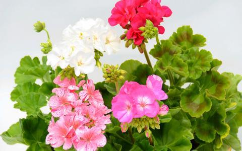 Комнатные цветы, которые защищают от несчастных случаев
