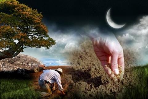 Лунный календарь садовода и огородника на март-2019: благоприятные и неблагоприятные дни для посадки рассады, таблица высадки семян