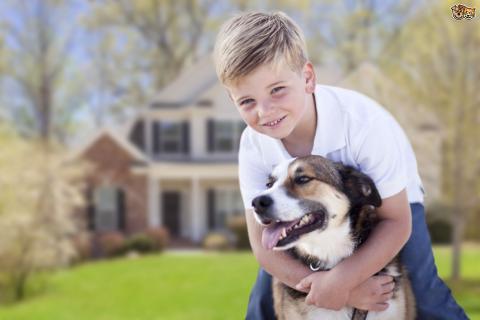 Домашние животные могут спасти ребёнка от развития аллергии и ожирения