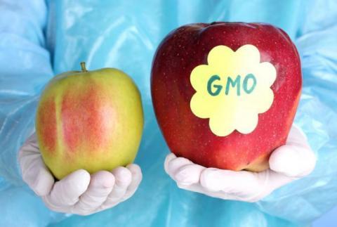 Фрагменты ДНК из ГМО-продуктов задерживаются в клетках человек – ученые