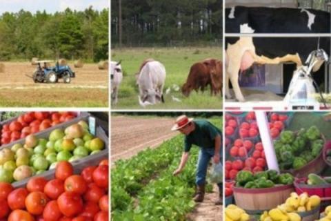 Российское сельхозпроизводство