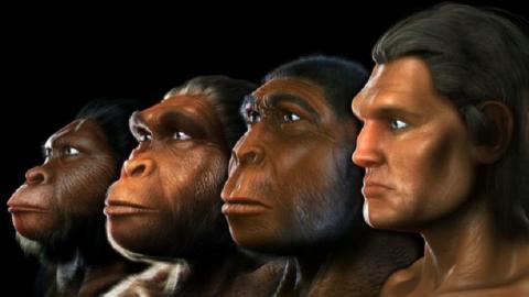Недостающее звено: неизвестного предка человека нашел искусственный интеллект