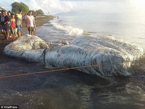 Гигантского монстра вынесло на берег на Филиппинах: местные жители ждут беды