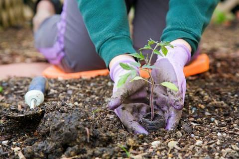 Лунный посевной календарь для садоводов и огородников на 2017 год