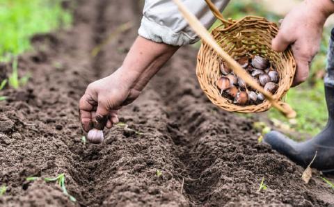 Когда сажать чеснок и другие овощи в сентябре 2019 года: посевной календарь, советы садоводам и огородникам