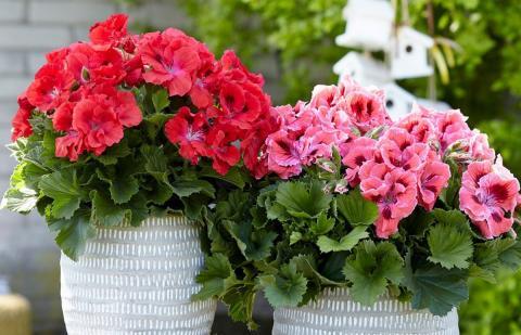 Чудодейственные подкормки для комнатных растений, которые обеспечат мощный рост и пышное цветение