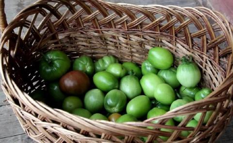 Секрет быстрого созревания зеленых помидоров раскрыл ученый