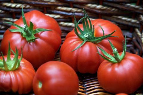 Как заморозить помидоры на зиму: лучшие и простые способы заморозки томатов
