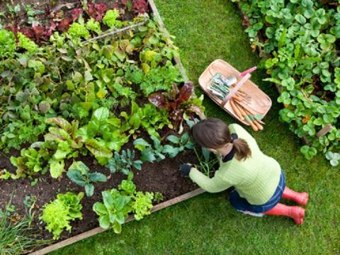 Лунный посевной календарь на 2017 год: запрещенные и благоприятные дни для проведения садово-огороднических работ