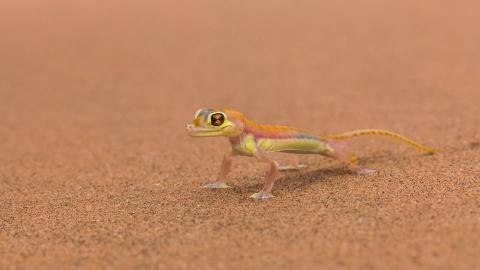 Виртуальный уфолог обнаружил на Марсе аномалию, похожую на ящерицу