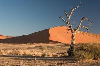 На Марсе засохшие леса как «страшный сон» пугают ученых НАСА