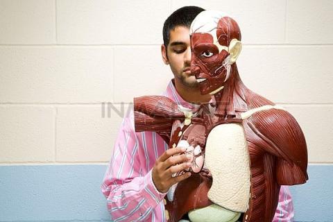 Ученые назвали пять ненужных органов в теле человека