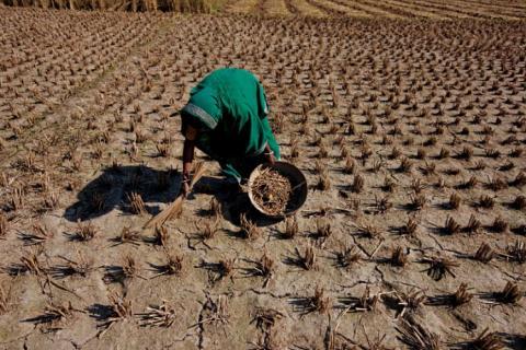 Земля лишится пищи: глобальное потепление грозит планете продовольственным кризисом уже через десять лет