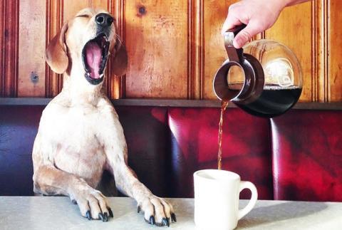 Альтернатива кофе: названы напитки, помогающие проснуться утром