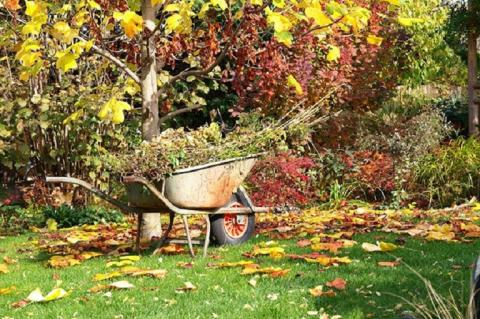 Лунный календарь на октябрь 2018 года для садоводов и огородников: благоприятные дни для осенних посадок
