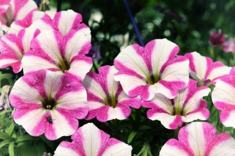 Цветы в марте, посев