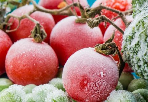 Помидоры можно заморозить: проверенный способ сохранения свежих томатов на зиму