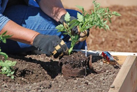 Благоприятные дни для посадки рассады в марте-2019: таблица высадки семян по лунному календарю