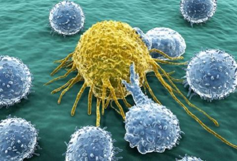 Названы пять продуктов, убивающие раковые клетки
