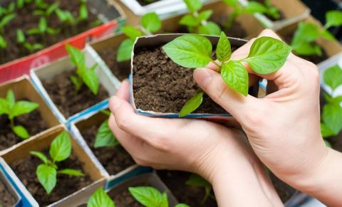 Посевной календарь на февраль 2017 года: какую рассаду посадить в феврале, сроки выращивания, благоприятные дни