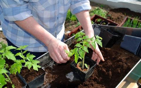 Благоприятные дни для посева рассады в 2019 году: календарь огородных работ