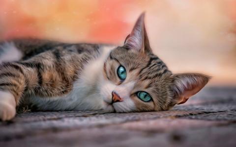 День кошек-2019: веселые стихи с поздравления в День кота