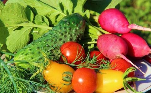 Народные способы увеличения урожая овощей: какие кухонные отходы можно использовать на огороде