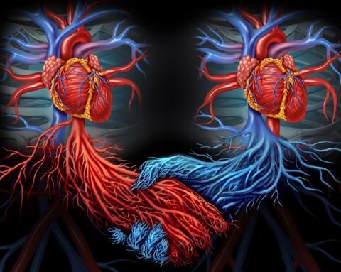 На Земле зарождается новая раса - люди с двумя сердцами