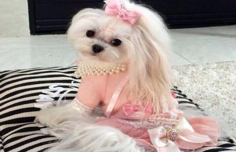 """""""Сладкая собачья жизнь"""": фотографии уморительных щенков из соцсети Инстаграм"""