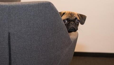 Инженеры придумали, как спасти собак от стресса из-за новогодних салютов