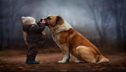 Породы собак: какие собаки самые добрые