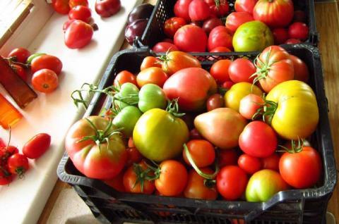 Как ускорить дозревание зеленых помидоров: самые эффективные способы