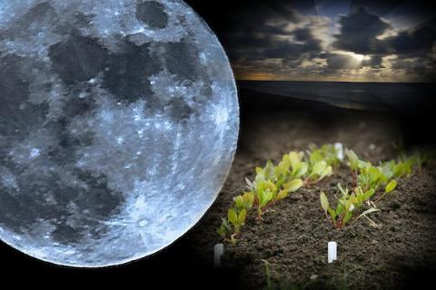 Воздействие Луны на посадку и уход за растениями 3 ноября