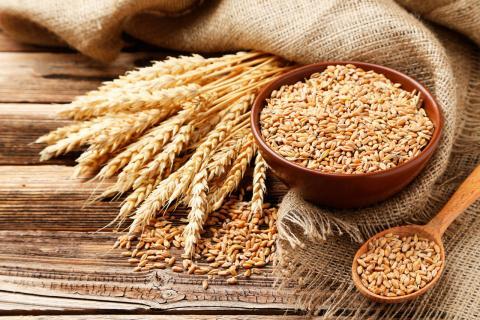 Россельхознадзор: выдача сертификатов на экспорт пшеницы во Вьетнам приостановлена