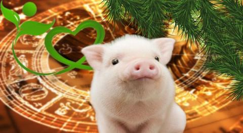 Гороскоп здоровья для всех знаков Зодиака на 2019 год Жёлтой Свиньи