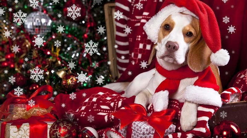 Как встречать Новый 2018 год Собаки
