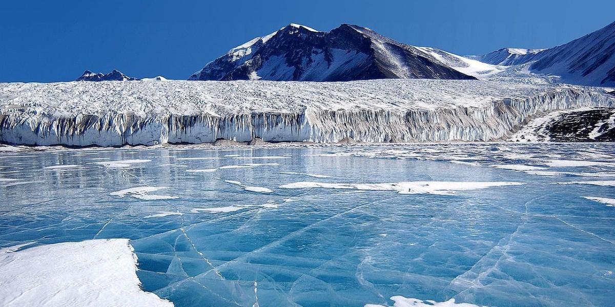 В Антарктиде ученые обнаружили загадочных мертвых существ