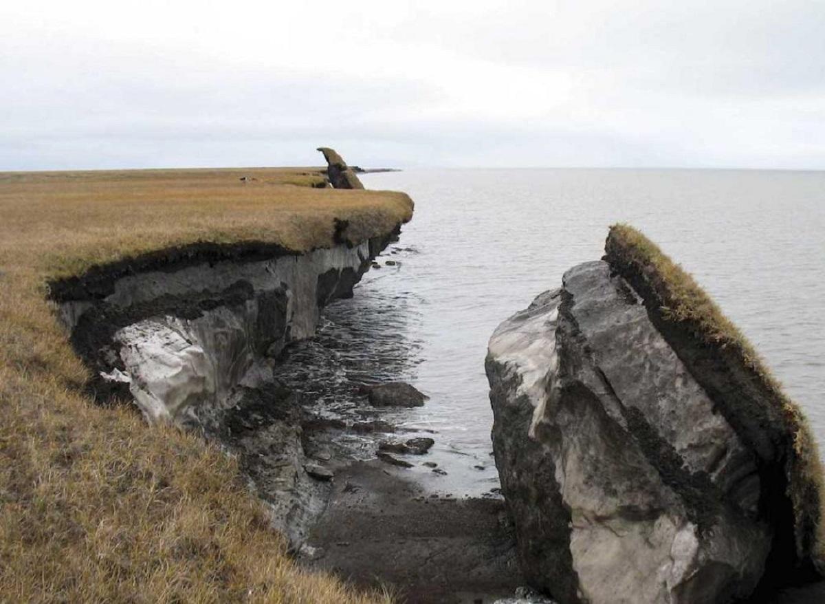 В Сибири нашли самого древнего в мире щенка