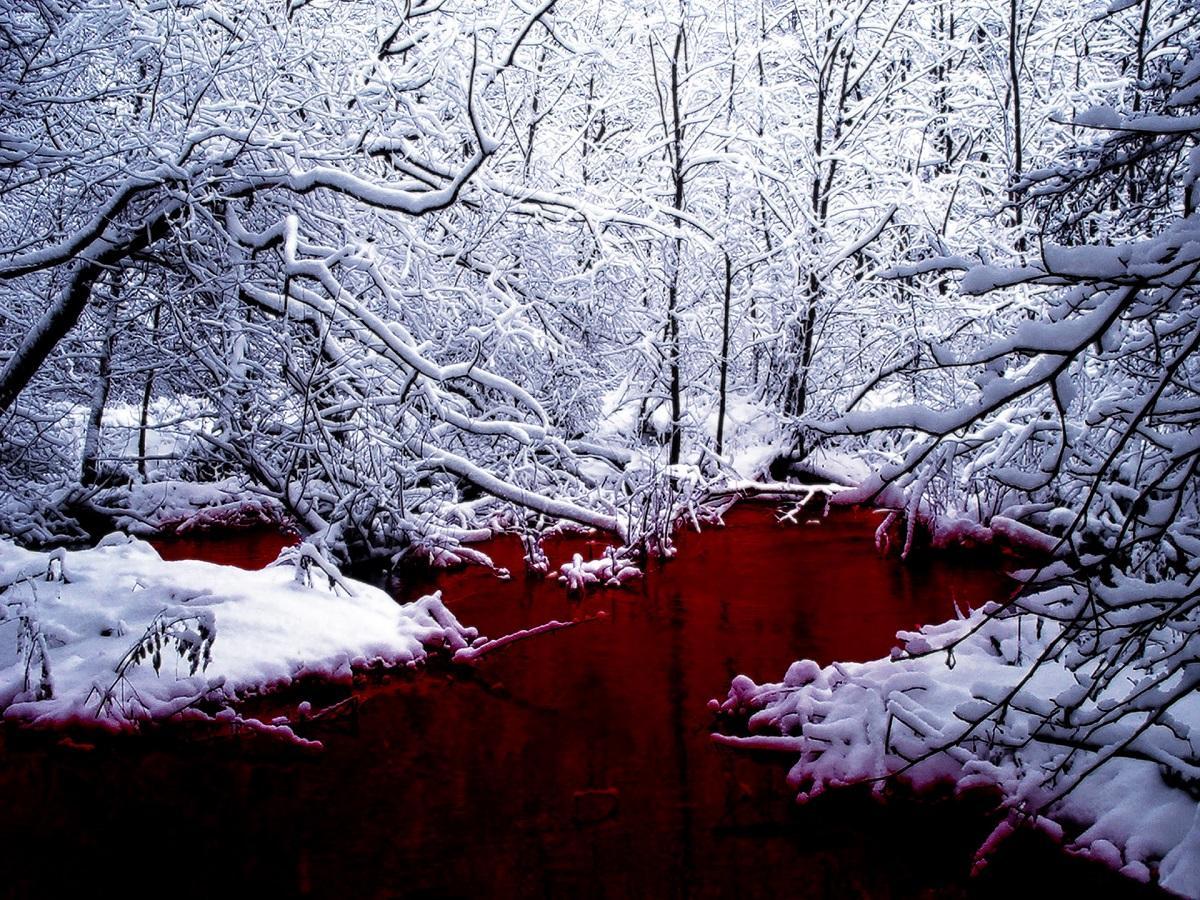 """В Омской области нашли """"озеро"""" из крови"""