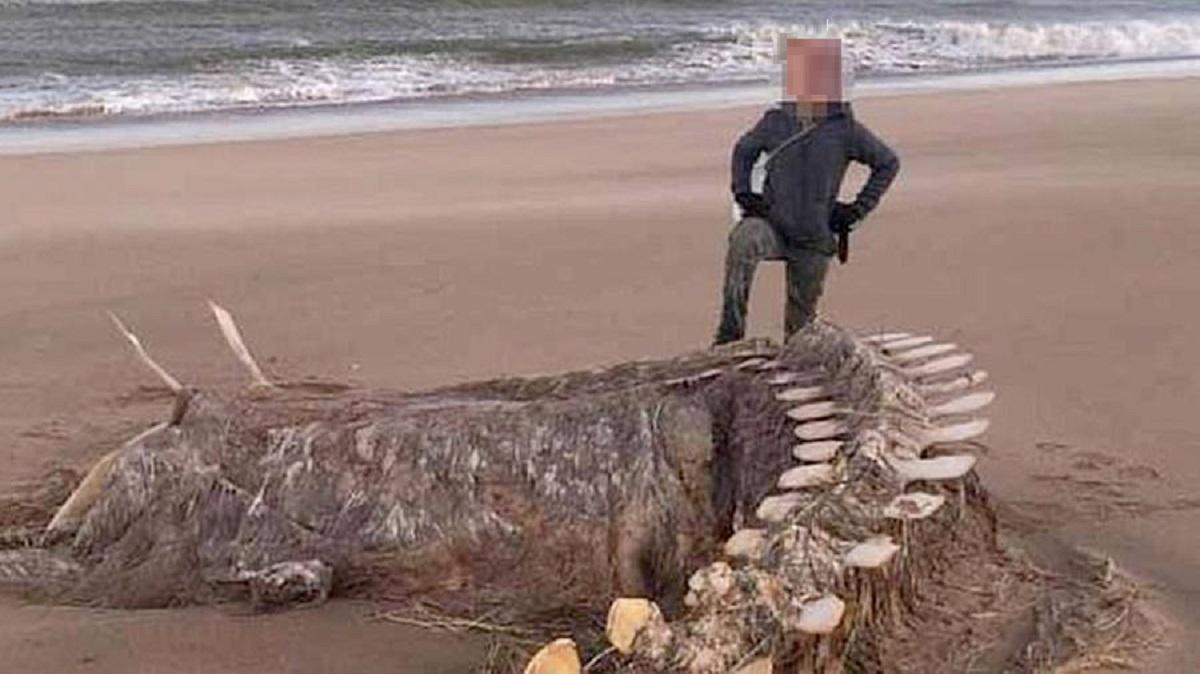 На пляже Шотландии обнаружили скелет неизвестного морского зверя