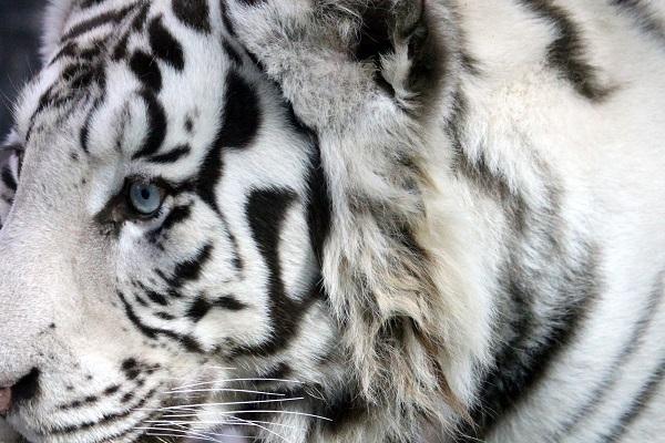 10 самых дорогих животных мира
