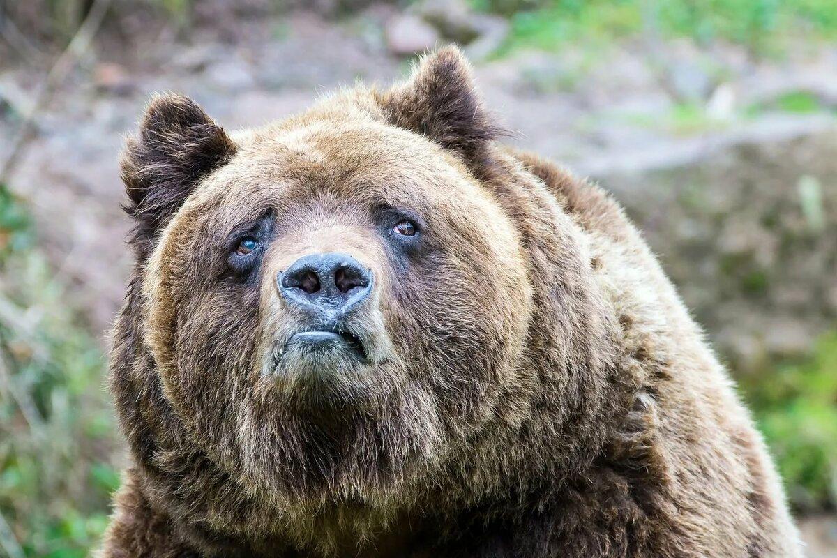 Ржачные картинки медведя
