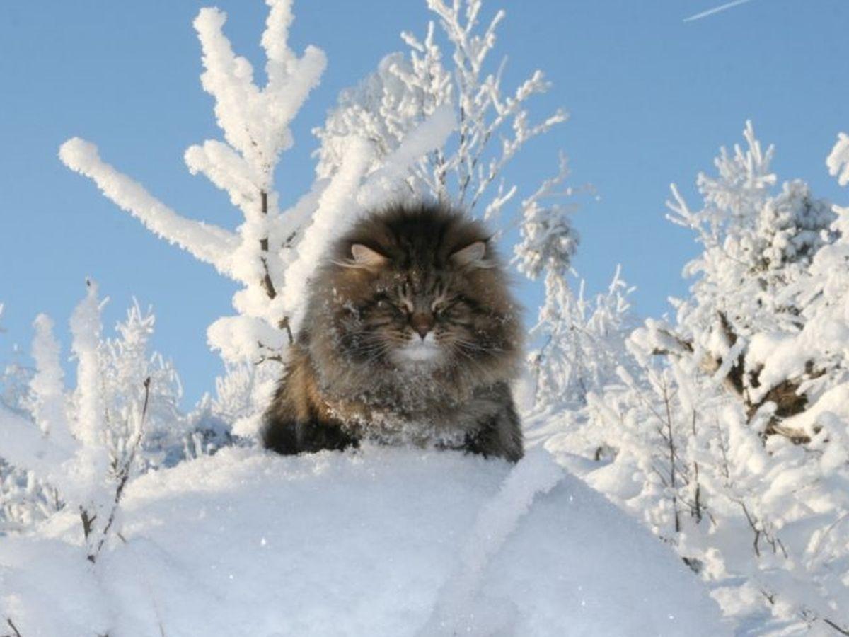 По Астрахани ударили морозы, стало известно, когда потеплеет