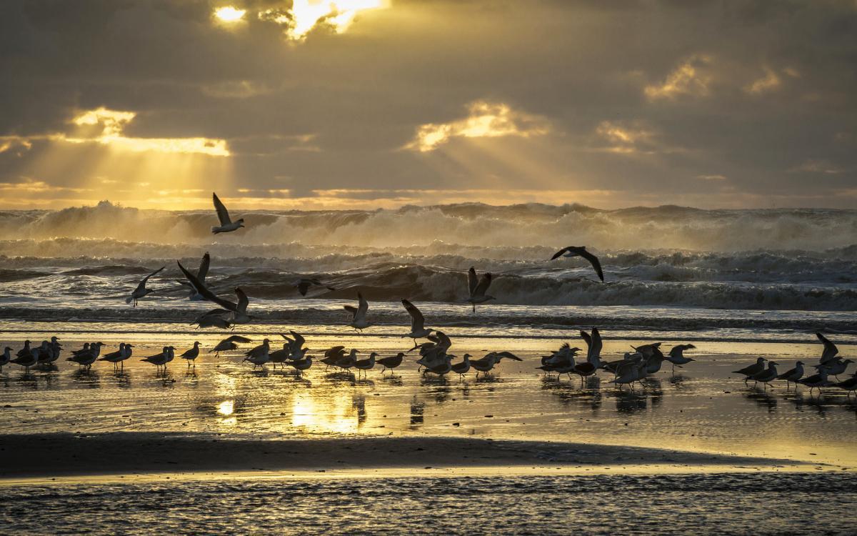 Тела мертвых птиц заполонили пляжи Австралии