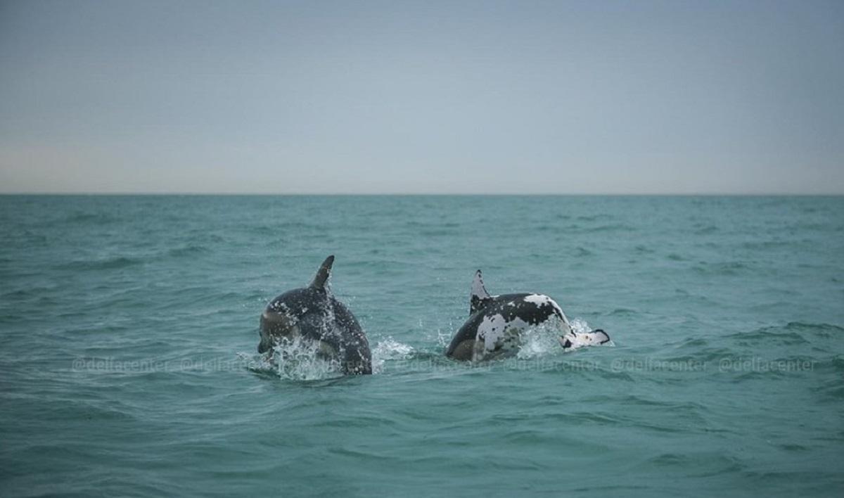 На море у берегов Сочи заметили «дельфина-далматинца»