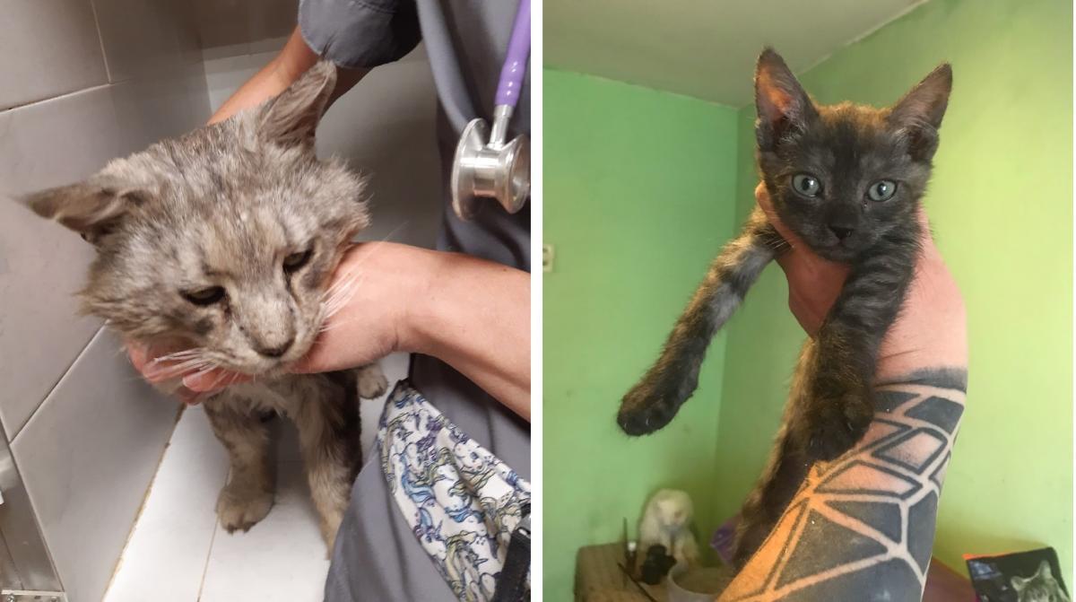 В Воронеже брошенный мейн-кун на время стал «мамой» уличным котятам