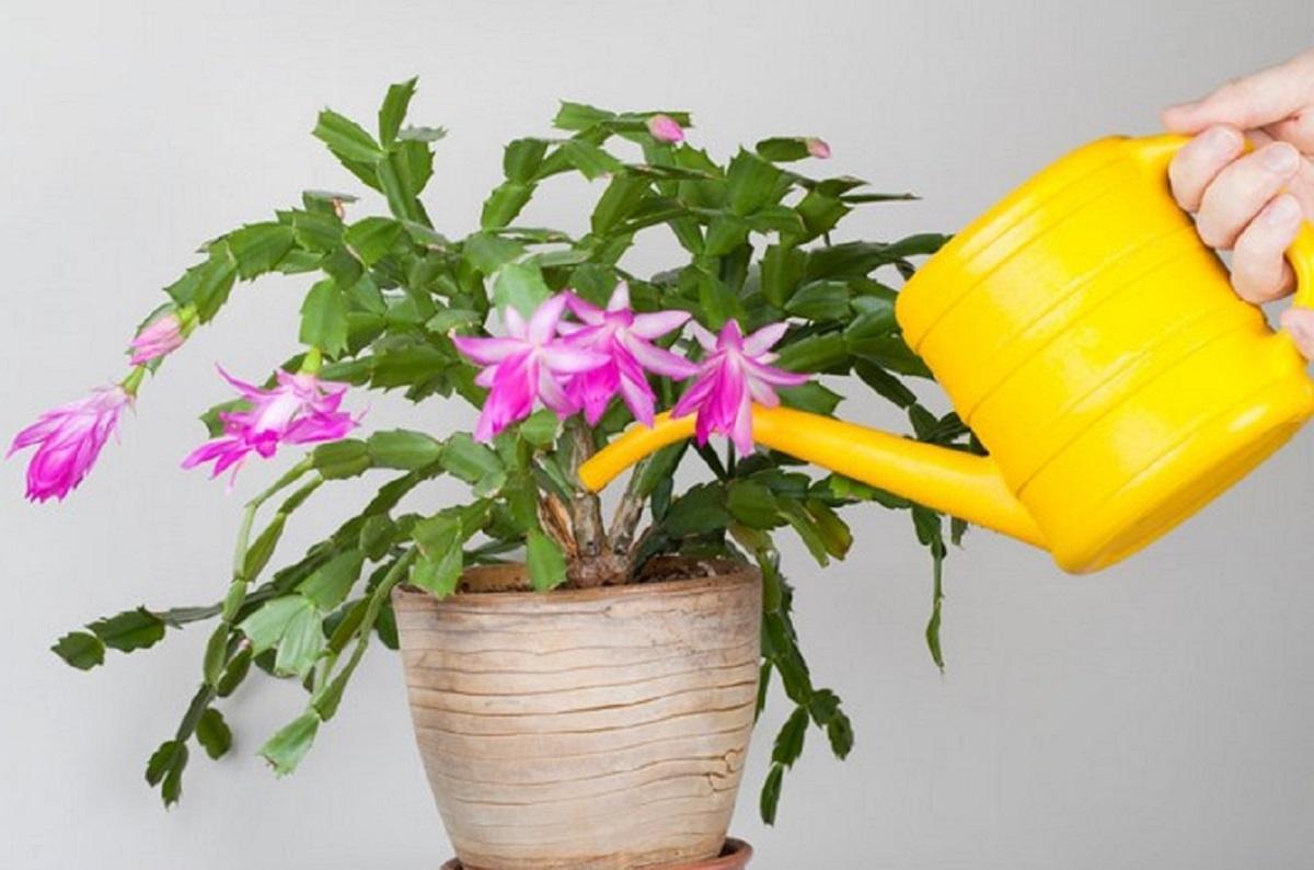 Комнатные цветы осенью и зимой