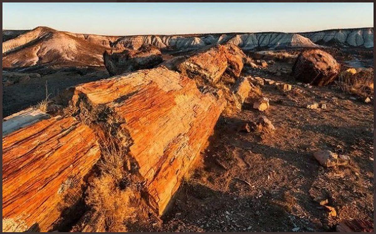 В Андах обнаружено гигантское окаменелое дерево, которому 10 миллионов лет