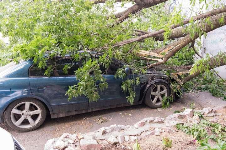 Аномалию с падающими деревьями в Ростове объяснил эколог
